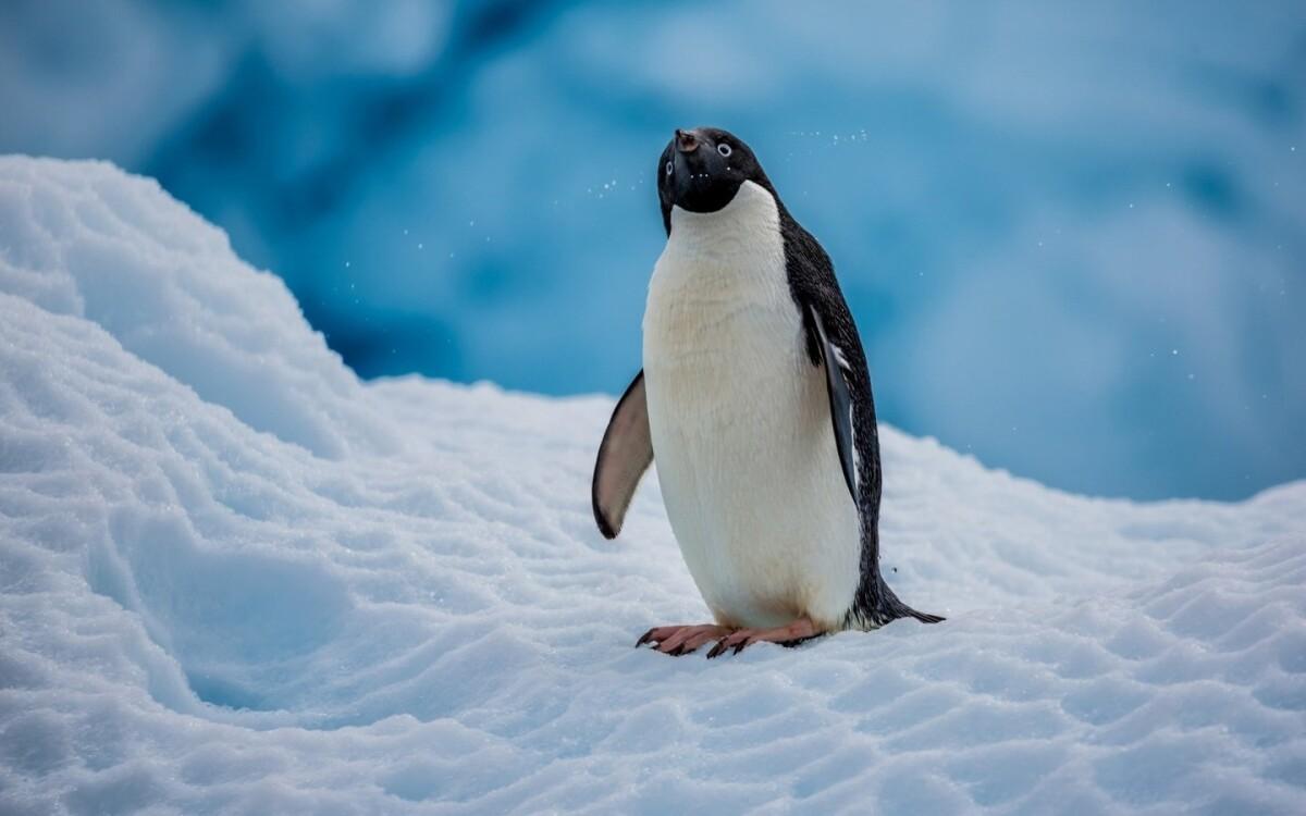 Penguin Free: как не попасть под санкции поисковых систем и что делать, если их уже наложили