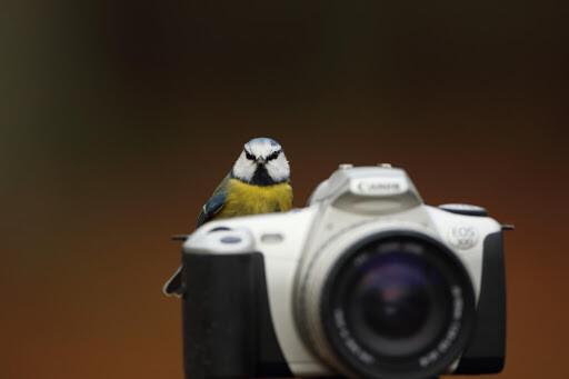 Сейчас вылетит птичка! Или как правильно фотографировать товар для Инстаграм