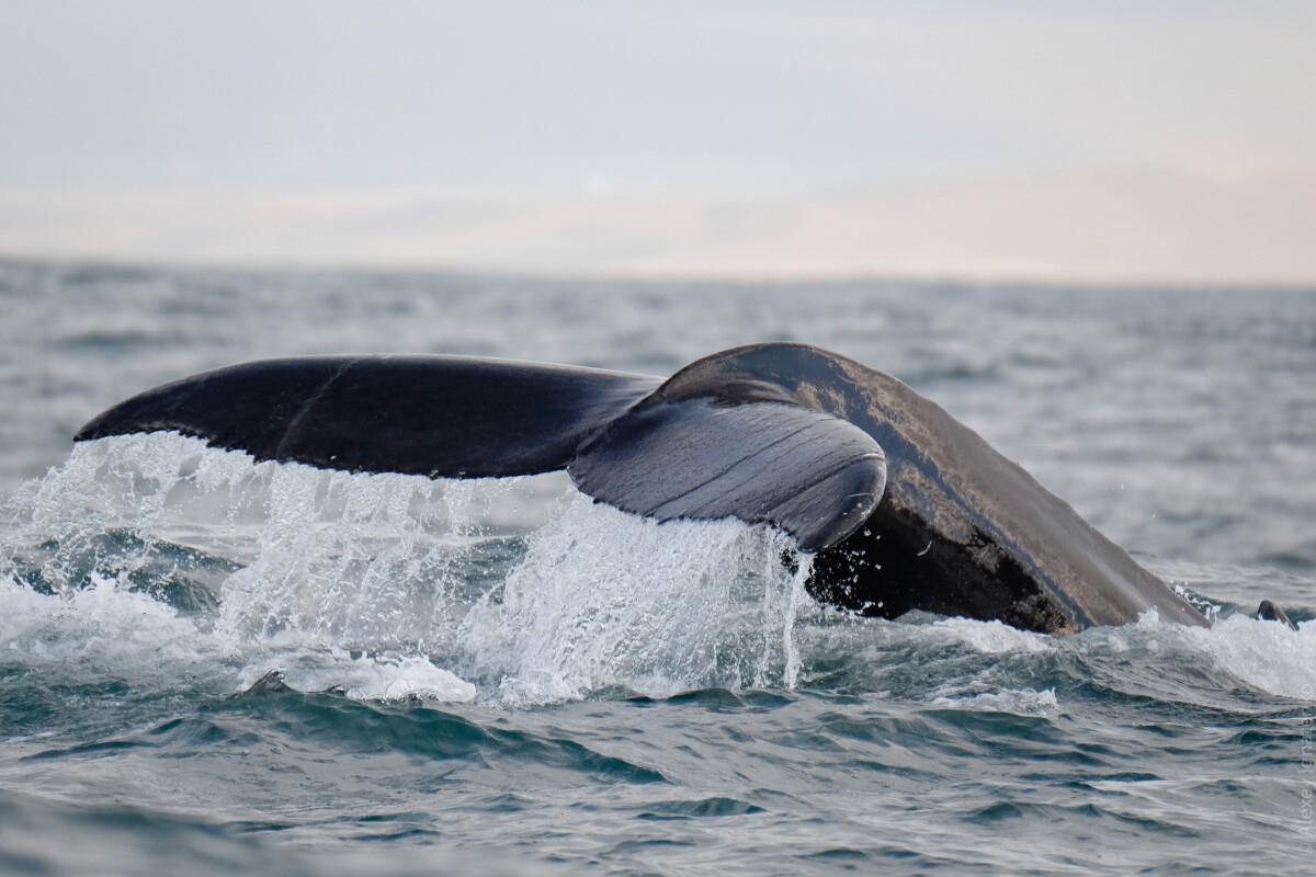7 китов юзабилити: что нужно знать о правильной работе сайта